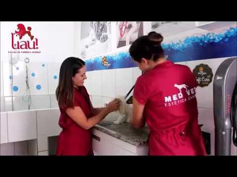 Видео Curso banho e tosa porto alegre