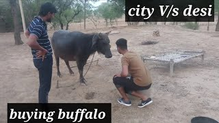desi Vs city buying buffalo || Udte Parindey || Pawan yadav & Sumit rao