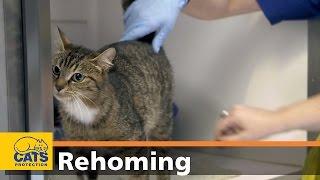 Rehome an older cat thumbnail