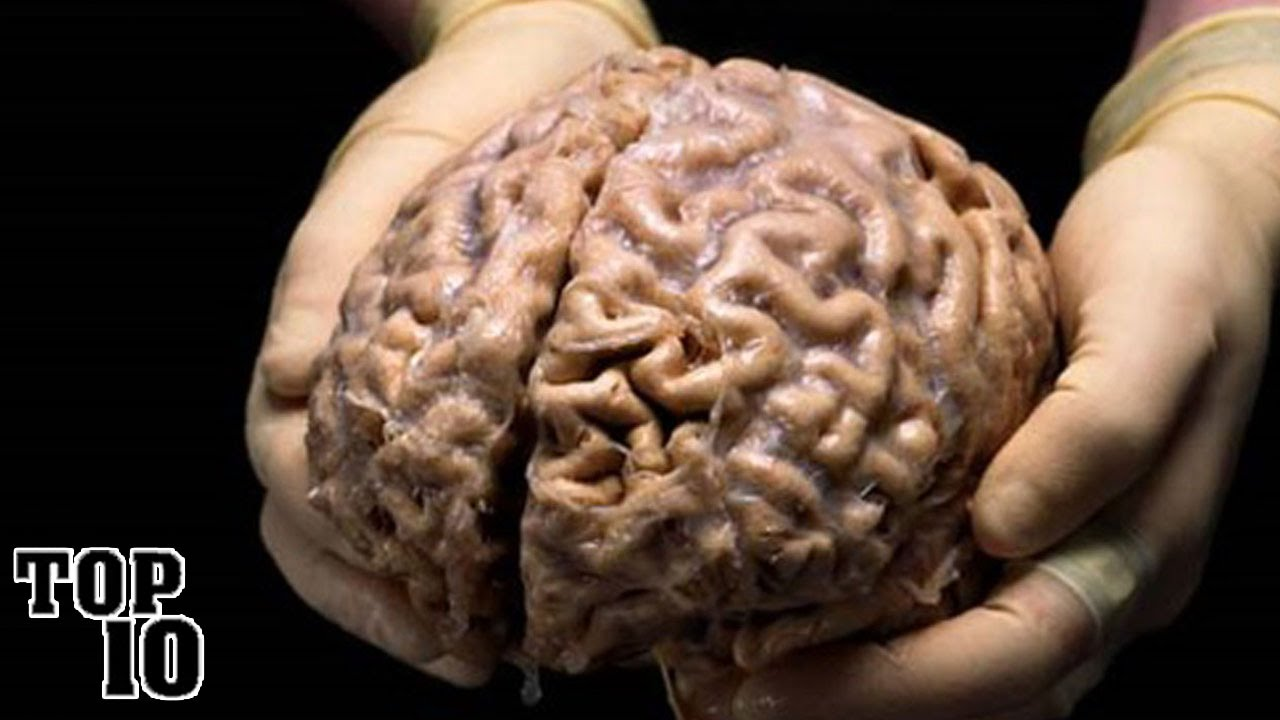 Top 10 Amazing Facts About The Human Brain Youtube