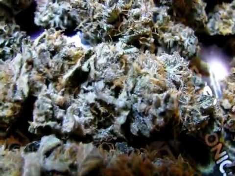how to grow marijuana with cfl lights