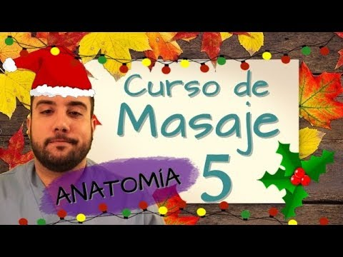 CURSO DE MASAJE 5/ ANATOMÍA - YouTube