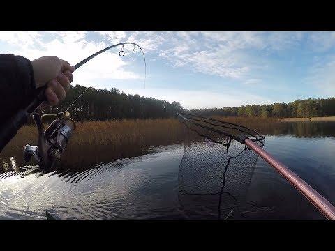 Szczupaki z trzcin / Szczupak 2018 / Jesienny spinning