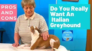 Italian Greyhound Pros And Cons, Do You Really Want An Italian Greyhound