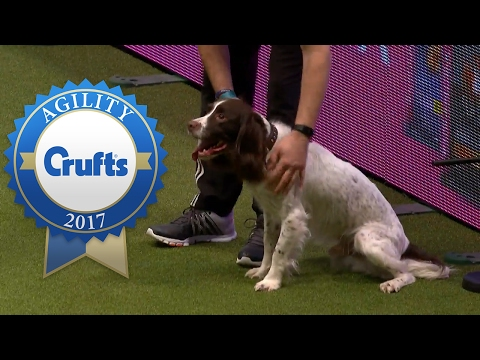 Thumbnail: Agility - Crufts Large Novice and Medium ABC Jumping Final (Part 1) | Crufts 2017