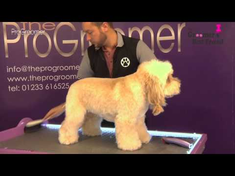 How to groom a Cockapoo - Teddybear Trim - Grooming Guide - Pro Groomer
