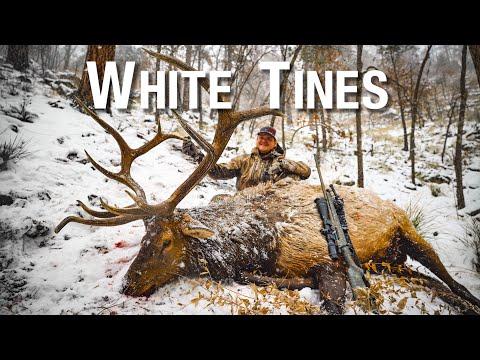 Late Season Arizona Bull Elk Hunt With Austin Atkinson | THE ADVISORS : White Tines