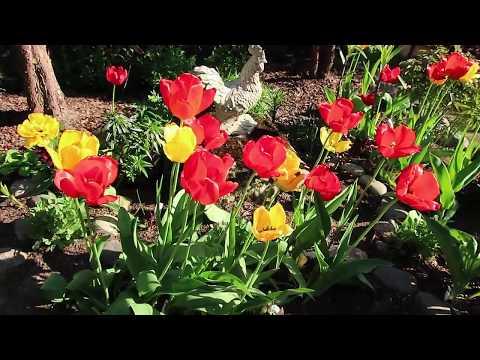 сад-конец мая