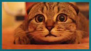 Коты смотрят фильмы ужасов.