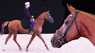Дончак! Ну до чего красив!!! Донская порода лошадей - Золотая лошадь. Конная выставка ИППОсфера 2017