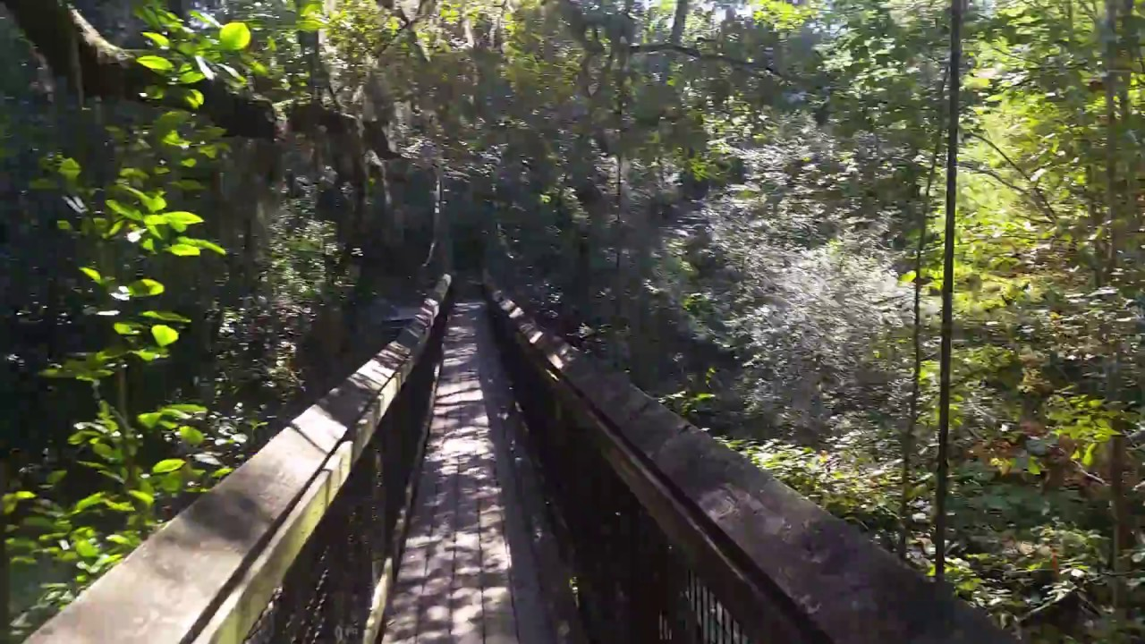 Ravine Gardens State Park Suspension Bridge Palatka Fl Youtube
