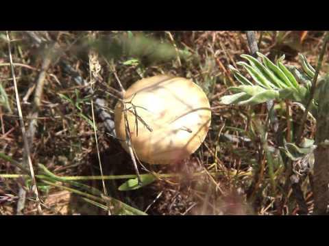 Съедобные грибы (с фото) -