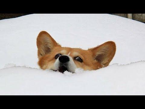 Randy McCarten - Watch Dogs Having Fun In The Snow