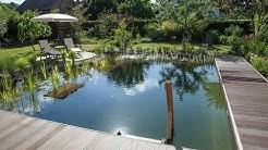 Wo Grün begeistert: So entsteht ein Schwimmteich-Garten