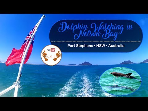 Wanderful: Dolphin Watching in Nelson Bay | Port Stephens, New South Wales | Australia