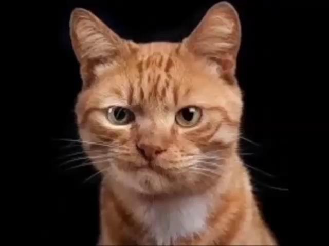 -----REMIX-----Sanyi a macska---