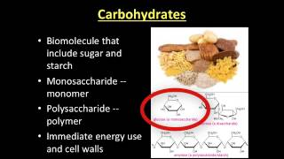 Video Lecture: 3-3 Macromolecules