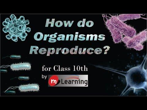 How Do Organisms Reproduce: Sepal, Corolla, Stamen, Carpels, Cross & Self Pollination - 05