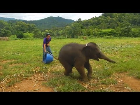Dieser Elefant kriegt einen Lachflash wie ein Kind - Bislang nicht dokumentierte Momente!