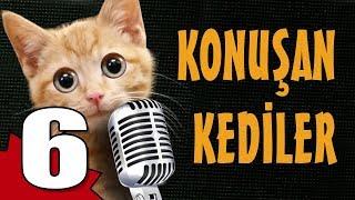 Konuşan Kediler 6 - En Komik Kedi Videoları