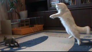Кролики + кошка. Зарядка.