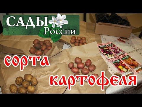 НПО Сады России.  Посылка весна 2017 год. Сорта картофеля