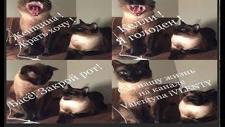 Время, проведенное с кошкой, никогда не потеряно даром =^..^= СИАМСКИЕ КОШКИ
