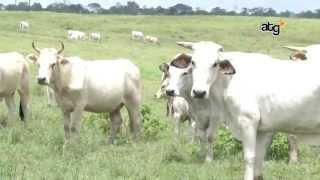 L'EPAG donne un coup de pouce à l'agriculture guyanaise