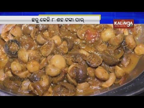 "Watch: An Expensive Mushroom Of Odisha ""Bada Chatu"" | Kalinga TV"