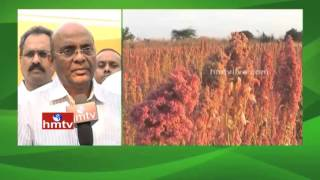 Nela Talli | Groundnut (Verusenaga) Cultivation and Guidance | Quinoa Farming Process | HMTV