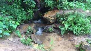 Tiny Blue Butterflies Flutter Near a Rocky Creek
