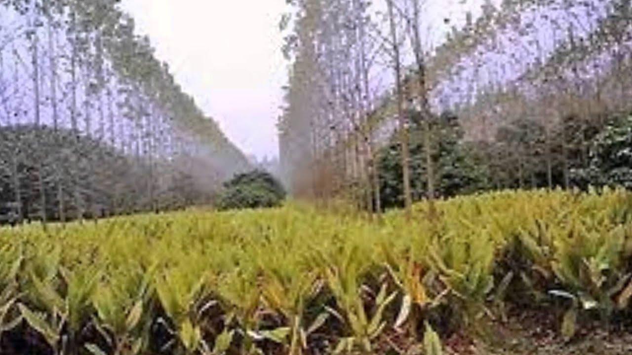 Estrategias in-situ y ex-situ para la conservación de flora - YouTube