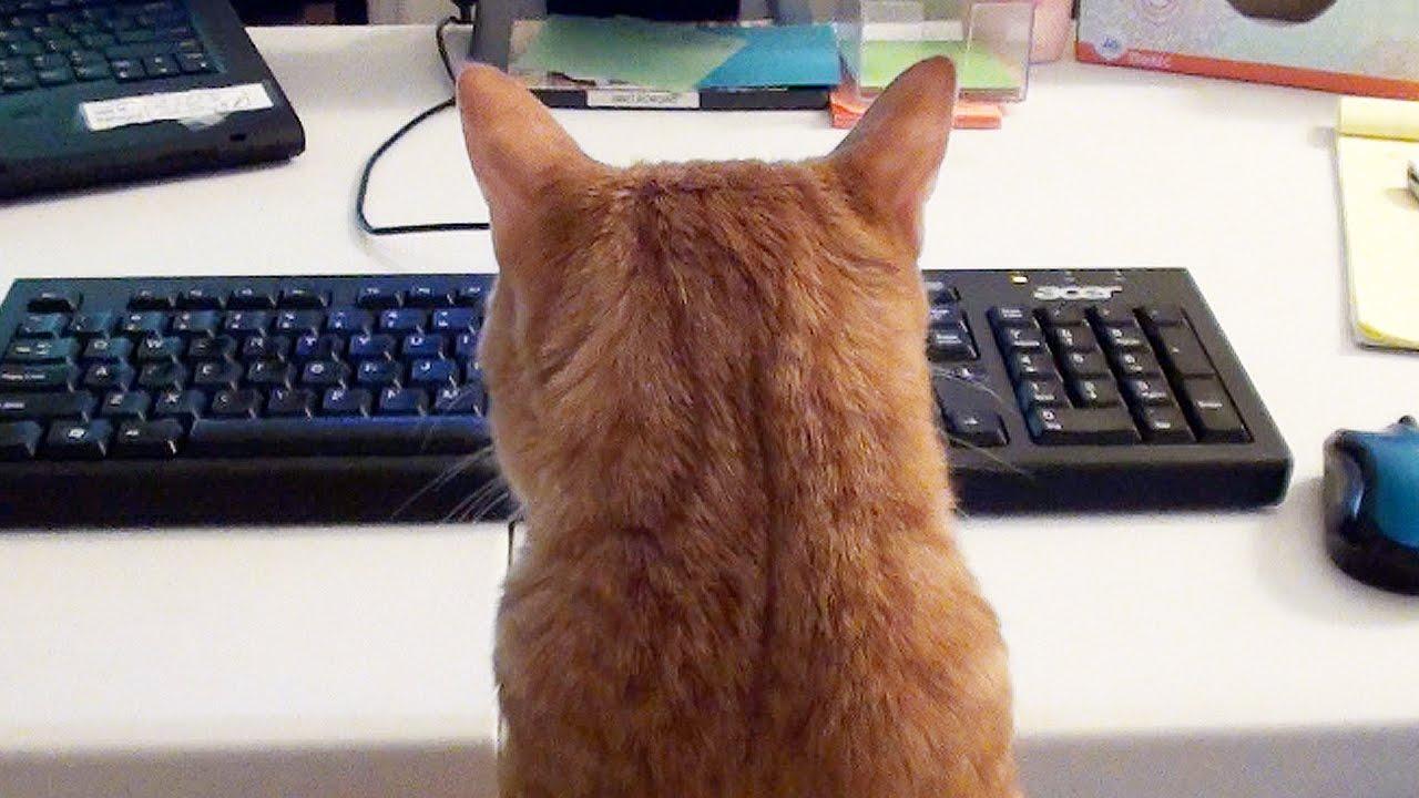 Два кота не дали хозяину работать из дома