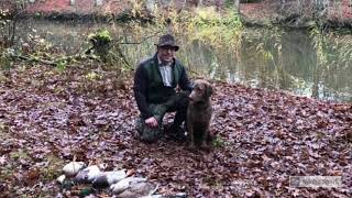 Mallard hunt with Chesapeake Bay Retriever 8 months old (her 3 rd) first season