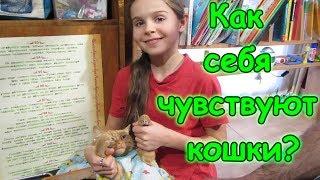 Как себя чувствуют кошки после стерилизации. (12.17г.) Семья Бровченко.