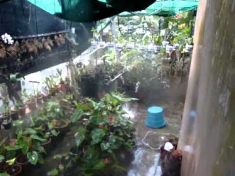 Mist Irrigation For An Orchid Farm Youtube