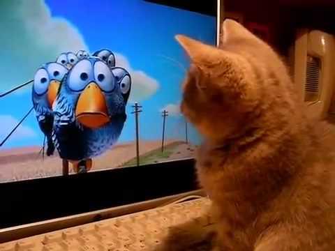 Прикольные собаки и кошки. Как котенок смотрит мультик ...