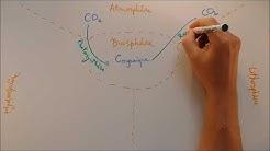 Cycles biogéochimiques - Cycle du carbone