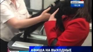 """У кота, спасенного в Шелехове, нашлись хозяева, """"Вести-Иркутск"""""""