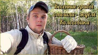 Весенние Грибы отошли - ждем Колосовики! | Цветут ландыши, жужжат комары, поют птички... Лепота!