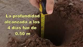 Inicio de proyecto de riego cinta exudante   San Juan Argentina