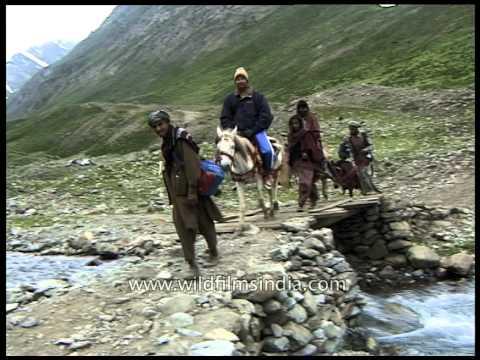 Pony ride towards Amarnath shrine: Kashmir