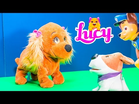 Club Pets Lucy Obedient Puppy Fun at Dog Park with Cacamax and Wiggles Parody