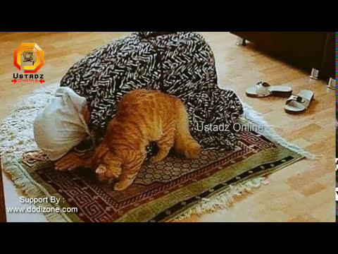 SubhanaAllah!! Keajaiban Tuhan, Kucing Bersujud 'SHOLAT' !!