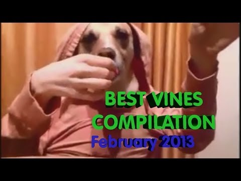 Best Vines Compilation February 2013 [epic, awesome, funny]