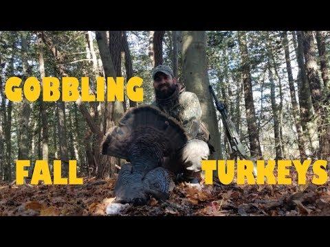 FALL TURKEY HUNTING - RUNNING AND GUNNING FOR GOBBLING TURKEYS