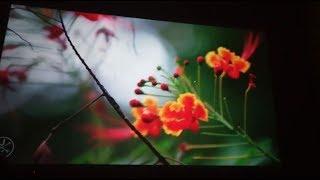 Проектор BT96. Домашний кинотеатр. И конкурент большому телевизору. Проектор для дома.