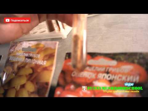 Вешенка розовая (тропическая) - Купить мицелий (семена) грибов