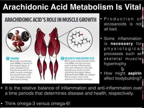 PUFAs: Basics Of Arachidonic Acid And Its Metabolism