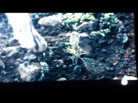She Wolf - David Guetta (ft Sia) | Ali Brustofski Cover (Music Video)из YouTube · С высокой четкостью · Длительность: 4 мин  · Просмотры: более 11.936.000 · отправлено: 24-9-2012 · кем отправлено: Ali Brustofski
